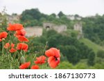 Poppy Flowers With Background...
