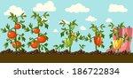 vintage garden banner with root ... | Shutterstock . vector #186722834