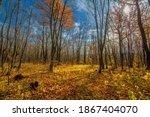 Autumn Landscape Photography ...