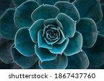 Close Up Of A Teal Cactus. Teal ...