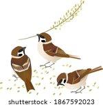 Sparrow With Rice Grain  Vector ...