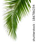leaves of coconut tree isolated ... | Shutterstock . vector #186786254