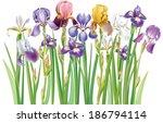 border of multicolor iris... | Shutterstock .eps vector #186794114