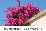 Beautiful Bright Pink...
