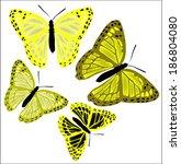 set of butterflies of different ... | Shutterstock .eps vector #186804080