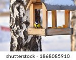 Tit At The Feeder In Winter. A...