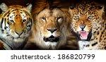 Portrait Tiger  Lion  Leorard...