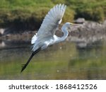 Egrets Are Herons Which Have...