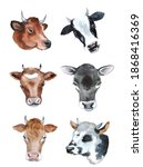 Watercolor Cute Cows On The...