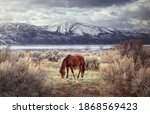 Wild Horse Northern Nevada Free ...