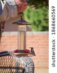 Hummingbird On Nectar Feeder...