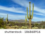 giant saguaro cactus at saguaro ... | Shutterstock . vector #186868916