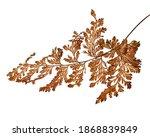 Fern Leaf  Sear Fern Isolated...