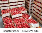 Crates Of Red Tomatoes In...