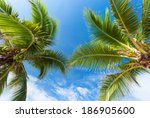 Twin Coconut Trees With Blue Sky