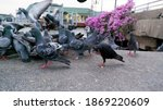A Flock Of Pigeons Standing...