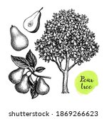 pear tree and fruits. ink... | Shutterstock .eps vector #1869266623