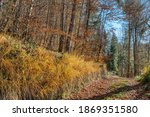 view on colorful autumn trees... | Shutterstock . vector #1869351580