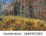 view on colorful autumn trees... | Shutterstock . vector #1869351583