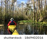 A couple kayaking through the great blackwater swamp in Okefenokee National Wildlife Refuge.