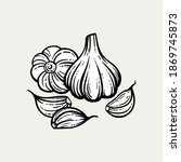garlic sketch. chopped garlic....   Shutterstock .eps vector #1869745873