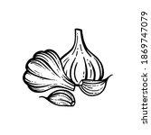 vector illustration of garlic...   Shutterstock .eps vector #1869747079