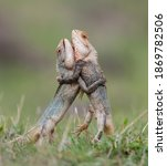 Two Cute Lizards Dragons...