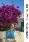 House With Bougainvillea Tree...