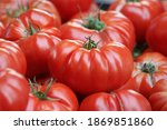 Fresh Big Red Tomatoes Close Up....