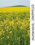 Oilseed Rape Agricultural Field