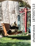 Small photo of MOSCOW, RUSSIA - SEPTEMBER 12, 2019: Big panda swings on a swing and eats bamboo at the zoo Big panda swings on a swing and eats bamboo at the zoo