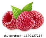 Three Fresh Raspberry With...