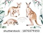Watercolor Kangaroo Isolated On ...