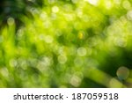 Abstract light blur through the leaves of the tree crown  - stock photo