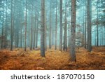 beautiful dreamy conifer forest.... | Shutterstock . vector #187070150