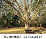 Wendell  North Carolina Usa 12...