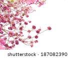 pink trumpet tree flower... | Shutterstock . vector #187082390