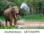 Elephant Make Water Spray  ...