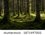 Thick Dark Forest With Moss And ...