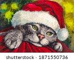 Cat In Santa Claus Hat. Funny...