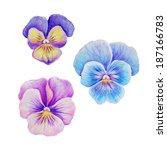 Pink Purple Violet Blue Pansy...