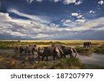 Elephants Marching Under...