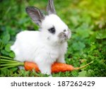 Stock photo funny baby white rabbit with a carrot in grass 187262429
