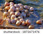A Lot Of Snails Gathered In One ...