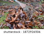 Many Wet Brown Leaves Form A...