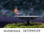 Red Robin Sitting On Edge Of A...