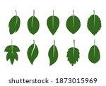 set of green various leaves.... | Shutterstock .eps vector #1873015969