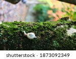 Snail On The Mossy Tree.