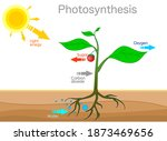 Photosynthesis Changes Sunlight ...