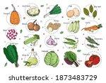 sketch of different vegetables. ... | Shutterstock .eps vector #1873483729